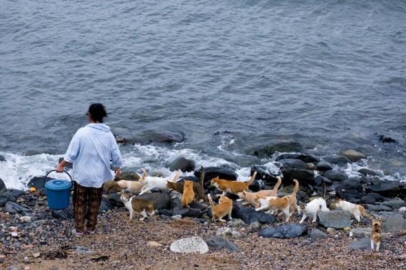 Toshirojima, La isla de los gatos Playas del mundo