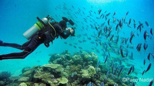 Los mejores lugares para bucear en la Gran Barrera de Coral Playas del mundo