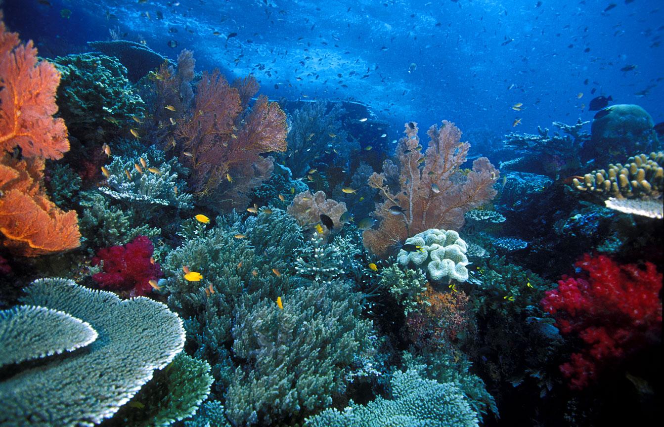Raja Ampat, un Amazonas submarino en Indonesia